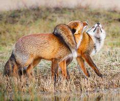 "beautiful-wildlife: ""True Love ;-) by © Pim Leijen """