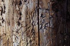 Under the cortex / Gångar under barken