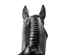 Equestrian photography : Teri Kessler by Kaytlyn Karssen. All The Pretty Horses, Beautiful Horses, Equine Photography, Animal Photography, Photography Ideas, Horse Braiding, Horse Ears, Horse Portrait, Cool Braids