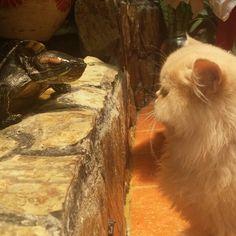#AnimalLove #Cat #Tortoise