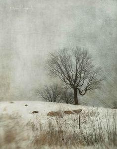heiden jamie hide and seek winter-walk-watercolor-landscape Winter Trees, Winter Art, Abstract Landscape, Landscape Paintings, Watercolor Landscape, Winter Painting, Encaustic Art, Country Art, Winter Landscape