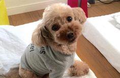 夏の犬服はどうなの? ただのファッションではない洋服の利用法 | 犬の情報マガジンドッグトレンド DogTrend