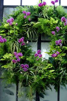 Orchid Christmas Wreath | Flickr - Photo Sharing!
