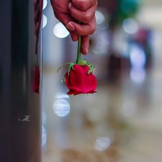 RED HOT Beautiful Rose Flowers, Beautiful Hijab, Romantic Dp, Creative Embroidery, Girls Hand, Winter Pictures, Red Roses, Allah, Hands