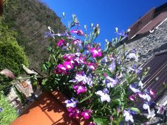 St George's Day Liguria style