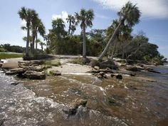 Scenic Loop & Trail Takes You Through 'Prehistoric Florida' in Ormond Beach | TheLedger.com