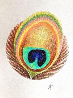 22 - 2 - 2015  Pauwenveer