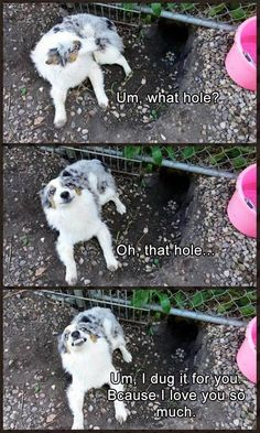 These extra-wholesome dog memes are giving us new life. Check out some of our favorite dog memes now and don't forget to pin your favorite! Read More: Funny Animal Memes Of The Day - 32 Pics Funny Animal Jokes, Funny Dog Memes, Cute Funny Animals, Cute Baby Animals, Funny Dogs, Funny Puppies, 9gag Funny, Hilarious Sayings, Dog Jokes