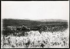 To samer i båt høster sennegras. Foto: Ellisif Wessel (1866–1949)
