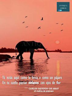 Tú estás aquí como la brisa o como un pájaro / en tu sueño pastan elefantes con ojos de flor. - Carlos Oquendo de Amat, '5 metros de poemas'. Literatura Peruana