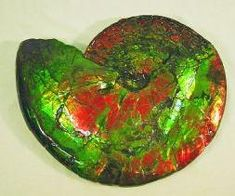 Image result for ammolite jewelry