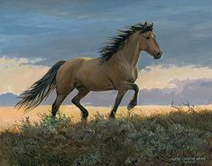 'Buckskin Stallion' by Persis Clayton Weirs Original Paintings