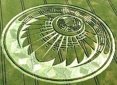 crop circle Silbury Hill 20090705 3