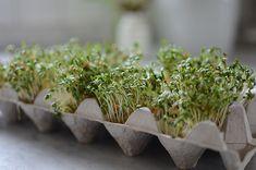 Spring Is Coming, Natural Herbs, Urban Farming, Farm Life, Greenery, Brunch, Healthy, Flowers, Skott