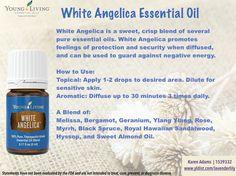 #YLEO White Angelica essential oil