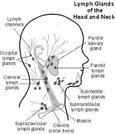 What is the lymphatic system? The lymphatic system consists of lymph nodes (often called lymph glands), a network of thin lymphatic channels (similar to thin blood vessels), and organs such as the spleen and thymus. Swollen Lymph Nodes, Lymphatic Massage, Drainage, Lymphatic System, Anatomy And Physiology, Head And Neck, Massage Therapy, Massage Tips, The Cure
