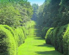 Old Westbury Gardens Hedge Trees, Old Westbury Gardens, Gothic Garden, Focal Points, Autumn Garden, Garden Gates, Photo Location, Hedges, Pathways