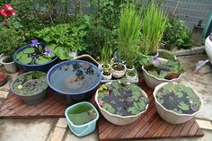 DIY-Containers-Garden-Pond-3