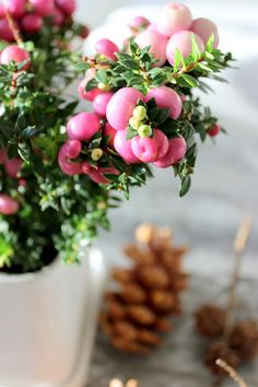 Sisustus COCO: Joulu juttuja. Photo. Sanna Siik-Keskisarja