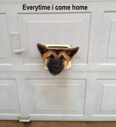 Attack Of The Funny Animals – 50 Pics