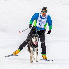 Skijöring with my Husky