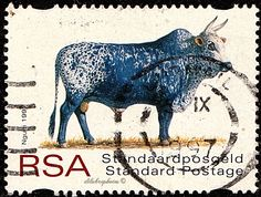 Republic of South Africa.  INDIGENOUS CATTLE.  NGUNI.  Scott 999 A335, Issued  1997 Aug 10, Perf. 14 1/2 Syncopated, Std. /ldb.