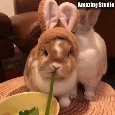 Cute rabbit always cute!!