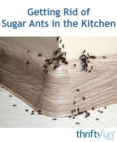 Getting Rid of Sugar Ants in the Kitchen Killing Sugar Ants, Boric Acid Ants, Kitchen Ants, Borax For Ants, Boric Acid Powder, Home Remedies For Ants, Borax Laundry, Ant Pest Control, Home Remedy Teeth Whitening