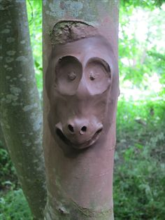 Wild Clay faces with air drying clay and stuck to an ash tree - plenty of water needed to stick it on and then shaped in place with fingers and a stick to shape the mouth and nostrils.