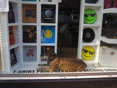 Dog in window :)
