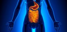"""An imbalance of beneficial versus harmful gut bacteria, known as """"dysbiosis"""", has been linked to a number of nervous system, gastrointestinal and psychological disorders."""