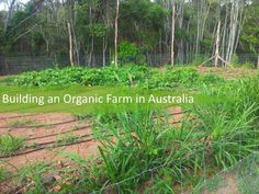An interesting story with photos about a small organic farm in the Australian countryside.