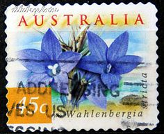 Australia.  FLORA & FAUNA TYPE OF 1996. WAHLENBERGIA STRICTA. Scott 1746E A511, Issued 1999 Apr 08, Coil Stamps Serpentine Die Cut 11 1/2, 45c. /ldb.