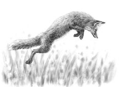 Leaping Fox  by Nolon Stacey