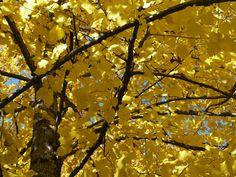 Autumn mulberry in Umbria