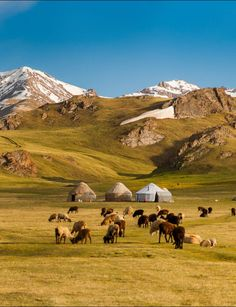 Nomadic yurts in the highlands of Kyrgyzstan by Anton Agarkov / 500px