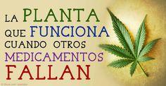 El cannabis es más seguro que los medicamentos recetados según la Dra. Gedde.  http://articulos.mercola.com/sitios/articulos/archivo/2015/04/26/canabis-medico-para-la-epilepcia.aspx