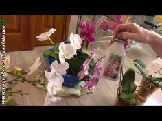 Подкормка орхидей / Мой Способ подкормки - YouTube