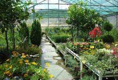 Cómo seleccionar las plantas para un jardín de contenedores - Bulhufas.es - Blogs - Hogar