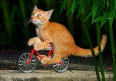 Doesn't look all that confident on the #bike, does he? more at #bmxware
