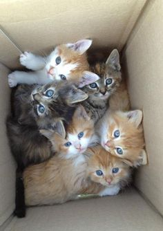 Cute? Yes. Do they all have forever homes and will be well taken care of for their lives? Well, that's how it should be. Please spay and neuter your pets so boxes like these don't end up at shelters or worse.