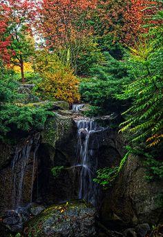 ✮ Autumn colors in the Bellevue Botanical Garden