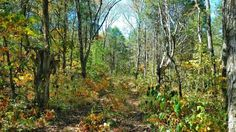 Tennessee Woodland Photograph by FernwehFreya on Etsy