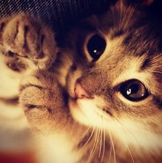 if there were to be a universal sound depicting peace, i would surely vote for the purr. barbara l. diamond