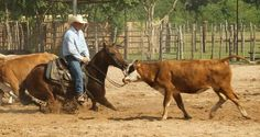 Sonny Rice Cutting Horses - Horses For Sale