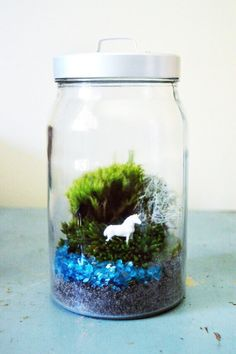 The Medium DIY Moss Unicorn Terrarium Kit contains: - Two types of the hardiest and highest quality moss that I collected by hand - If you wish -