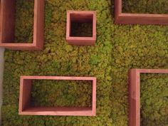 Cubi in legno di Abete su parete in muschio naturale , Milano 2013