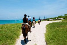 Aruba Horseback Riding and Snorkeling Tour - Aruba | Viator  Caribbean, excursion, ad, affiliate