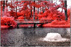 XiNature.com - Cool Splendor Reflections Light Colorful Amazing Splendid Red Shade Beautiful Wonderful Photography Garden Bright Sky Waterscapes Summer Intense Bridge Plants Up Sprawl Magnificent Colors Leaves Nature Pop Trees Lakes Clouds Parks Water Wallpapers Lake Hd