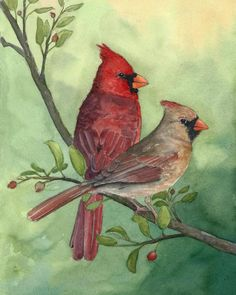 Items similar to Cardinals - Watercolor Print - Spring Cardinals - Art Print - Watercolor - Bird Print on Etsy Watercolor Bird, Watercolor Paintings, Watercolor Portraits, Watercolor Landscape, Abstract Paintings, Paintings Of Birds, Cardinal Paintings, Indian Paintings, Art Paintings